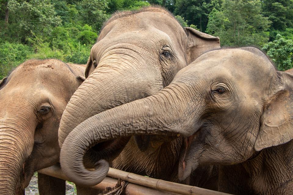 elephants-4651257_960_720